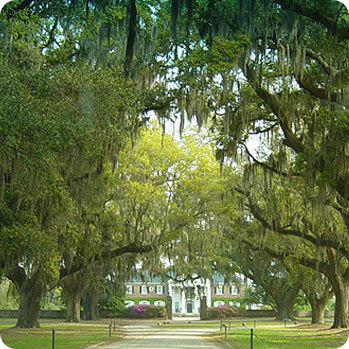 Boone Hall Plantation - Ceremony Sites, Rehearsal Lunch/Dinner, Reception Sites - 1235 Long Point Road, Mount Pleasant, SC, United States