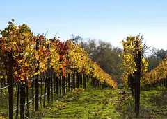 Sonoma Wine Country - Attraction - Sonoma, CA, Sonoma, CA, US