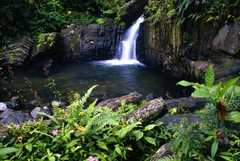 El Yunque Caribbean National Forest - Attraction - NAGUABO, NAGUABO, Puerto Rico