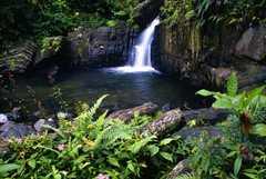 El Yunque Caribbean National Forest - Attraction - NAGUABO, NAGUABO, Puerto Rico