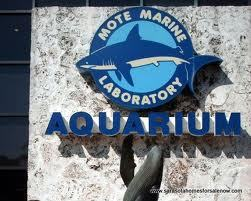 Mote Marine Laboratory - Attractions/Entertainment - 1600 Ken Thompson Parkway, Sarasota, FL, United States