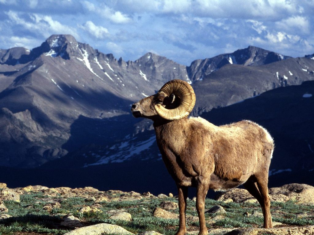 Rocky Mountain National Park - Parks/Recreation, Attractions/Entertainment, Campsites - 1000 U.S. 36, Estes Park, CO, United States