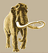Waco Mammoth Site - Waco Attraction - 6220 Steinbeck Bend Dr, Waco, TX, 76708