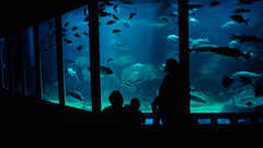 Virginia Aquarium & Marine Science Center - Attractions - 717 General Booth Blvd, Virginia Beach, VA, United States