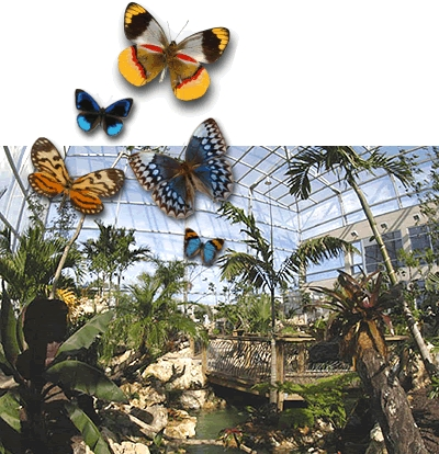 Butterfly Rainforest - Attractions/Entertainment - Florida Museum of Natural History, SW 34th Street & Hull Road, Gainesville, FL, United States