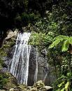 El Yunque Rainforest - Attractions/Entertainment - Carretera 191, Mameyes II, Puerto Rico, PR