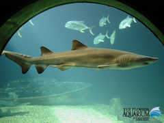 FL Aquarium - Attraction - 701 Channelside Dr, Tampa, FL, 33602, US