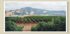 Matanzas Creek Winery - Wineries - 6097 Bennett Valley Rd, Santa Rosa, CA, 95404, US