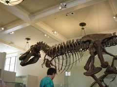 American Museum of Natural History - NYC Attractions - Central Park West and 79 St, New York, NY, United States