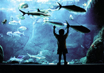 Waikiki Aquarium - Attraction - 2777 Kalakaua Ave, Honolulu, HI, United States