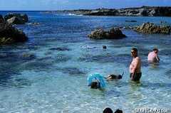 Sharks Cove - Beach -