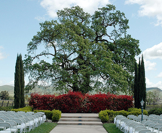 Garre Winery & Martinelli Event Center - Ceremony & Reception, Ceremony Sites, Registry, Reception Sites - 3585 Greenville Road, Livermore, CA, USA