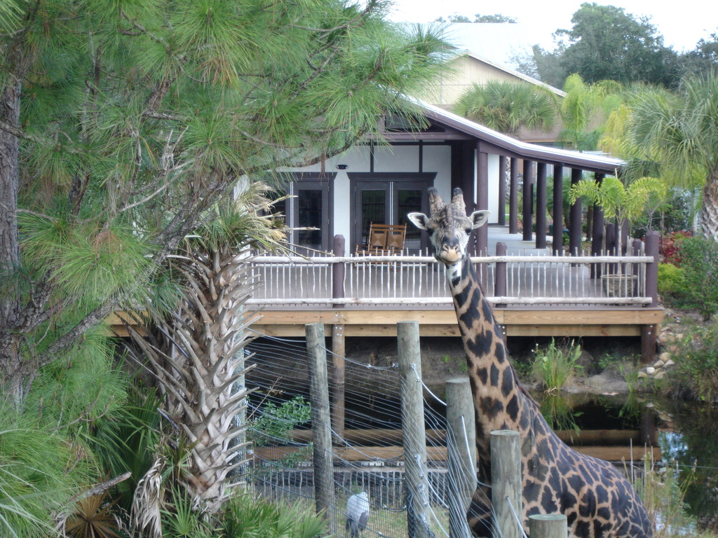 Brevard Zoo - Ceremony Sites, Attractions/Entertainment - 8225 North Wickham Road, Melbourne, FL, United States