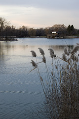 Too Good Pond - Photo Sites - Markham, ON, null, CA