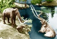 - Museums - La Brea Tar Pits, 5801 Wilshire Blvd, Los Angeles, CA