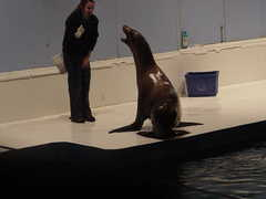 New England Aquarium - Boston Entertainment - New England Aquarium, Central Wharf, Boston, MA