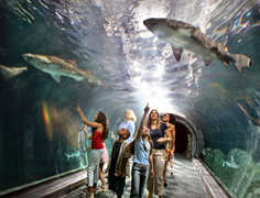 Adventure Aquarium - Attraction - 1 Riverside Dr, Camden, NJ, United States