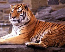Philadelphia Zoo - Attraction - 3400 W Girard Ave, Philadelphia, PA, United States