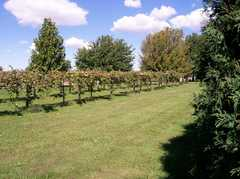 Alto Vineyards Champaign - Reception - 4210 N. Duncan Road, Champaign, Illinois, 61822, United States