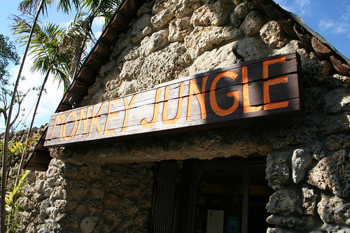 Monkey Jungle - Attractions/Entertainment - 14805 SW 216th St, Miami, FL, United States
