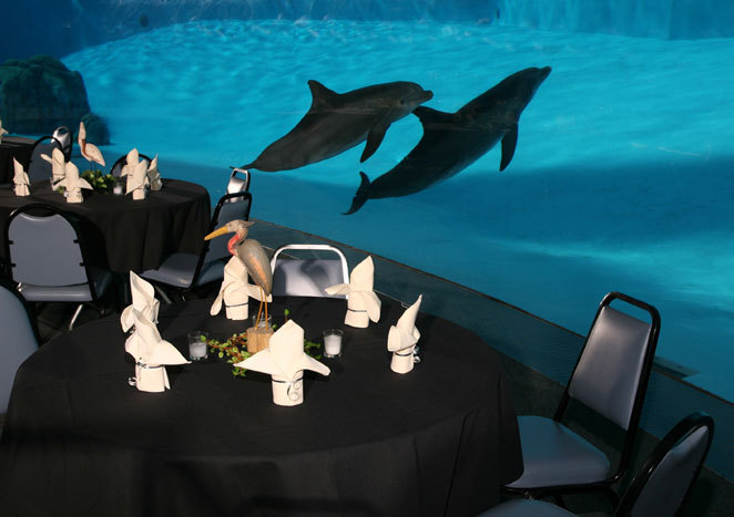 Texas State Aquarium - Attractions/Entertainment, Ceremony Sites, Reception Sites - 2710 N Shoreline Blvd, Corpus Christi, TX, 78402, US