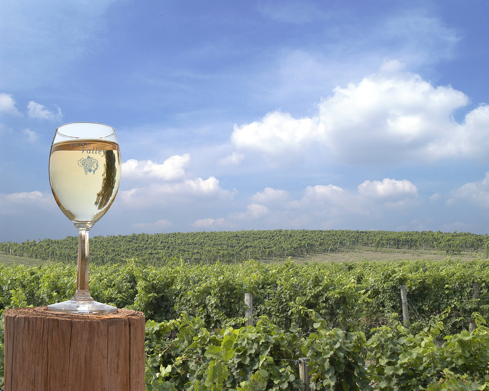 Fenn Valley Winery & Vineyards - Attractions/Entertainment, Wineries - 6130 122nd Ave, Fennville, MI, United States