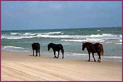 Wild Horse Museum Store - Attractions/Entertainment - 1070 Ocean Trl, Corolla, NC, United States