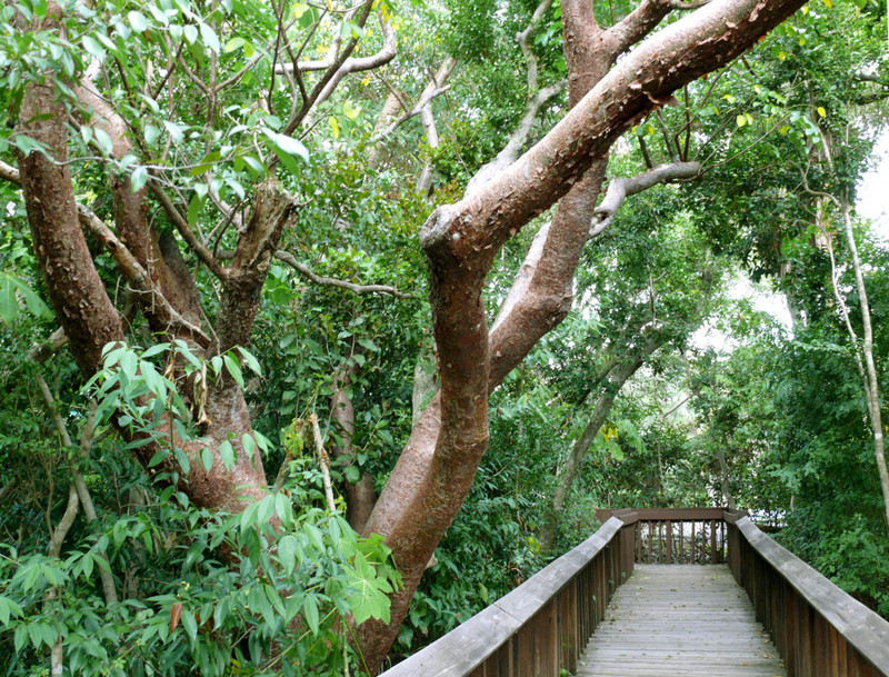 Gumbo Limbo Nature Center - Attractions/Entertainment, Restaurants - 1801 N. Ocean Blvd., Boca Raton, FL, United States