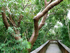 Gumbo Limbo Nature Center - Attraction - 1801 N. Ocean Blvd., Boca Raton, FL, United States