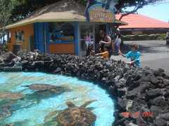 Sea Life Park - Attraction - 41-202 Kalanianaole Hwy # 7, Waimanalo, HI, USA