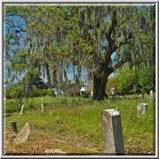 Holt Cemetery - Attractions - New Orleans, LA, United States