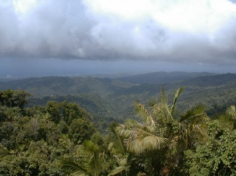 El Yunque National Forest - Attractions/Entertainment - Rio Grande, PR, 00745, USA