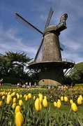 Dutch Windmill - Attraction - 1691 John F Kennedy Dr, San Francisco County, CA, 94121, US