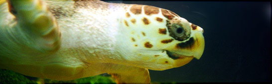 Sea Turtle Rescue Centre - Attractions/Entertainment - 214 Stable Road, Jekyll Island, GA, United States