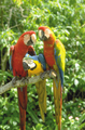 Parrot Jungle Island - Attraction - 1111 Parrot Jungle Trail, Miami, FL, United States