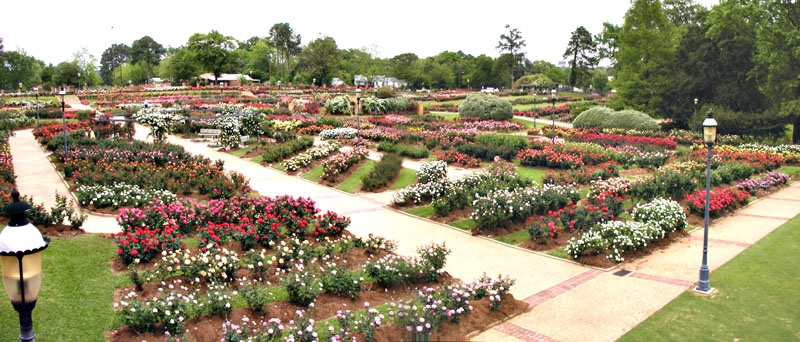 Rose Parade And Garden - Parks/Recreation, Attractions/Entertainment - 420 Rose Park Dr, Tyler, TX, 75702