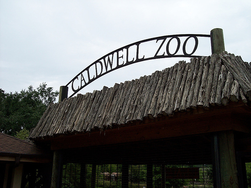 Caldwell Zoo - Attractions/Entertainment - 2203 W Martin Luther King Jr Blvd, Tyler, TX, 75702