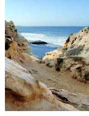 Torrey Pines State Reserve - Attractions/Entertainment, Parks/Recreation - 12600 N Torrey Pines Rd, La Jolla, CA, United States