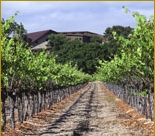 Vineyards -winetasting Trail - Wineries, Attractions/Entertainment - Zaca Station Rd, Los Olivos, CA, 93441, US