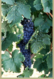 Becker Vineyards - Attractions/Entertainment, Wineries, Ceremony Sites - 464 Becker Farms Road, Stonewall, TX, United States