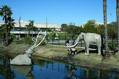 - Sight Seeing - La Brea Tar Pits, 5801 Wilshire Blvd, Los Angeles, CA