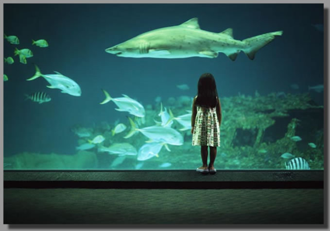 North Carolina Aquarium - Attractions/Entertainment - 374 Airport Rd, Manteo, NC, United States