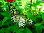 Butterfly World - Attractions/Entertainment - 3600 W Sample Rd, Coconut Creek, FL, United States