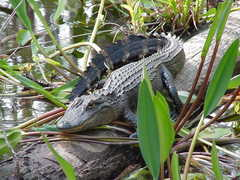 Florida Everglades - Attraction -