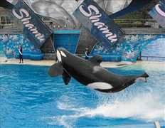 Sea World - Attractions/Beaches - Sea World, San Diego, CA, US