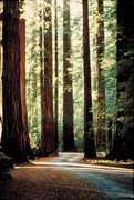 Muir Woods National Monument - Outdoor Recreation - 1 Muir Woods Road, Mill Valley, CA, United States