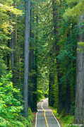 Avenue of the Giants - Trees/Beach/Wildlife - Avenue of the Giants, CA, CA, US