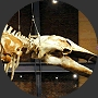 New Bedford Whaling Museum - Attractions/Entertainment, Reception Sites, Rehearsal Lunch/Dinner - 18 Johnny Cake Hl, New Bedford, MA, United States