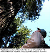 Redwood National Park - Trees/Beach/Wildlife - Bald Hills Road, Uninc Humboldt County, California, United States