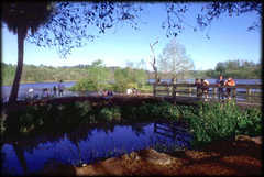 Lake Alice at the University of Florida - Attraction - Lake Alice, Gainesville, FL